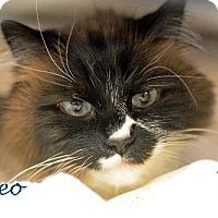 Adopt A Pet :: Theo - Negaunee, MI