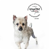 Adopt A Pet :: Posse - Sherman Oaks, CA