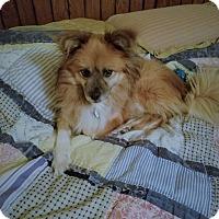 Adopt A Pet :: Kwatra - conroe, TX