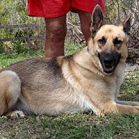 Adopt A Pet :: Bear - Citrus Springs, FL