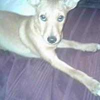 Adopt A Pet :: July - Crestview, FL