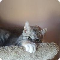 Adopt A Pet :: Mantis - Hazel Park, MI