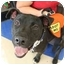 Photo 1 - American Bulldog/Labrador Retriever Mix Dog for adoption in Homestead, Florida - Jasper
