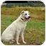 Photo 1 - Labrador Retriever Mix Dog for adoption in Monroe, Georgia - Casper