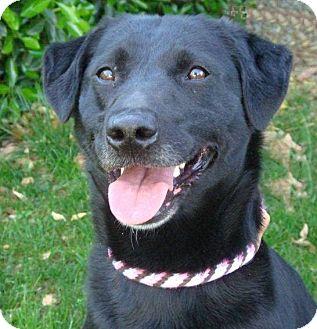 Labrador Retriever Mix Dog for adoption in Red Bluff, California - CARA