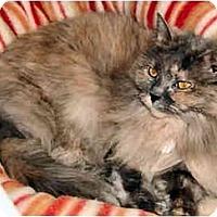Adopt A Pet :: Fran - Cleveland, OH