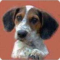 Adopt A Pet :: Hank Williams Jr. - New York, NY