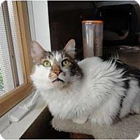 Adopt A Pet :: Mr. Bob - Kingston, WA