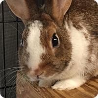 Adopt A Pet :: Murray - Williston, FL