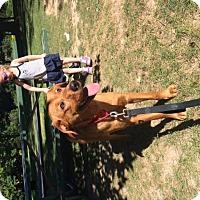 Adopt A Pet :: Copper - Lewisville, IN