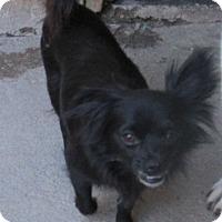 Adopt A Pet :: Tika - San Ysidro, CA