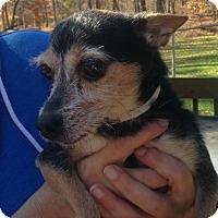 Adopt A Pet :: Cubbie - Bridgewater, NJ
