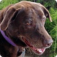 Adopt A Pet :: Agatha - San Diego, CA