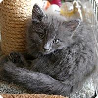 Adopt A Pet :: Abby - Sherman Oaks, CA