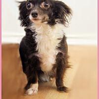 Adopt A Pet :: Jewel - conroe, TX