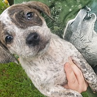 Adopt A Pet :: STERLING-ADOPTED - East Windsor, CT