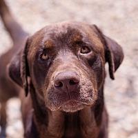 Adopt A Pet :: Bubba - Brattleboro, VT