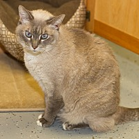 Adopt A Pet :: Smokey - Martinsville, IN