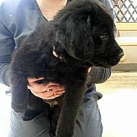 Adopt A Pet :: Clyde - New Canaan, CT