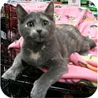 Adopt A Pet :: Monette - Anchorage, AK