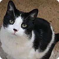 Adopt A Pet :: Chaps - Grand Rapids, MI