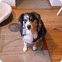 Adopt A Pet :: Shooter - Washington, IL