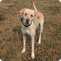 Adopt A Pet :: Delilah - Spring City, TN