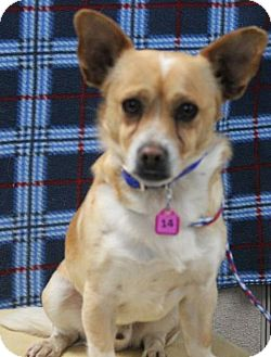 Terrier (Unknown Type, Small) Mix Dog for adoption in Gustine, California - MARSHALL