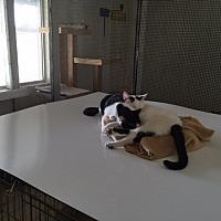 Adopt A Pet :: Freddie - Elk Grove, CA