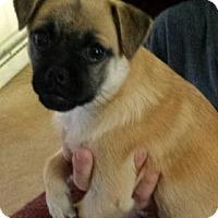 Adopt A Pet :: Jordan - Washington, PA