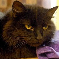 Adopt A Pet :: MS. SPOOKY - Pittsburgh, PA
