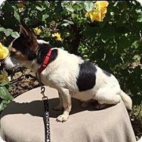 Adopt A Pet :: HOBY - Elk Grove, CA
