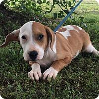 Adopt A Pet :: Tucker - Beacon, NY