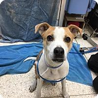 Adopt A Pet :: Bubbles - University Park, IL