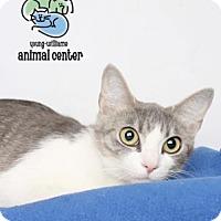 Adopt A Pet :: Juneau - Knoxville, TN