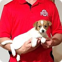 Adopt A Pet :: Jazmine - New Philadelphia, OH