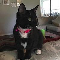Adopt A Pet :: Maikai - Ocala, FL