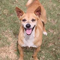 Adopt A Pet :: Roman - Pipe Creed, TX