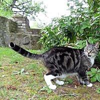 Adopt A Pet :: Spike - Bellingham, WA