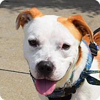 Adopt A Pet :: PD - Fairmont, WV