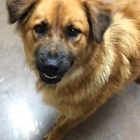 Adopt A Pet :: Tyra - Wilmington, OH