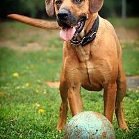 Adopt A Pet :: Bradley - Barnesville, GA