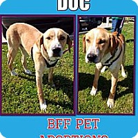 Adopt A Pet :: Doc - Silsbee, TX