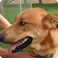 Adopt A Pet :: Coon #5189 - Jerome, ID