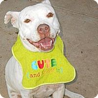 Adopt A Pet :: XENA - Phoenix, AZ