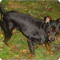Adopt A Pet :: Decker - Florissant, MO
