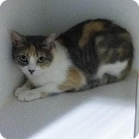 Adopt A Pet :: Bewitched - Hamilton, ON