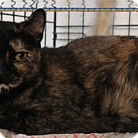 Adopt A Pet :: Zena - Trevose, PA