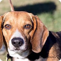 Adopt A Pet :: Zuri - Vacaville, CA