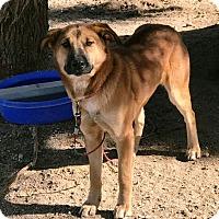 Adopt A Pet :: Molly - West Los Angeles, CA